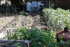 Vegetable-plot